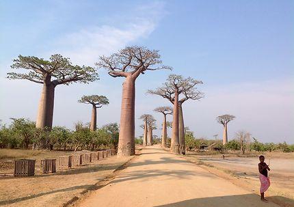 Un après midi à l'Allée des baobabs