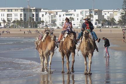Balade sur la plage d'Essaouira