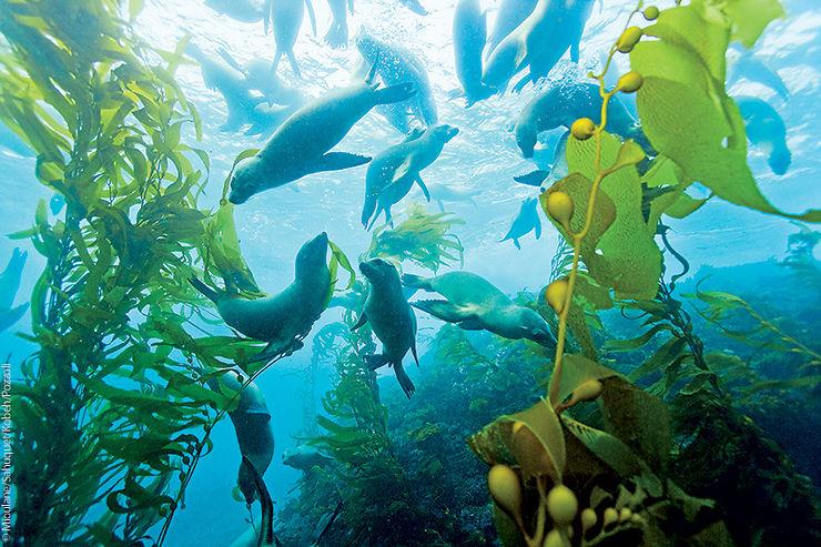 Otaries de Californie, Île San Clemente, États-Unis