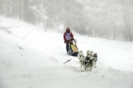 Course de chiens de traîneaux, Vercors