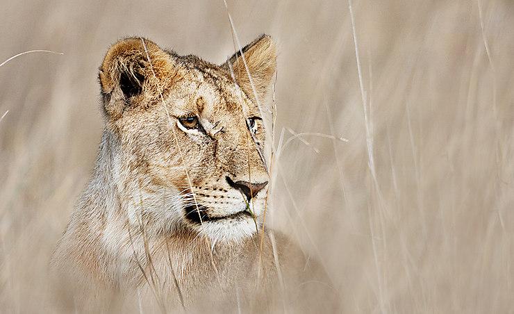 Réserve de Massaï-Mara, Kenya
