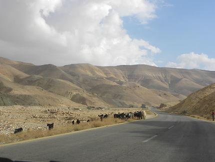 Comme des rois, sur la route du Roi en Jordanie