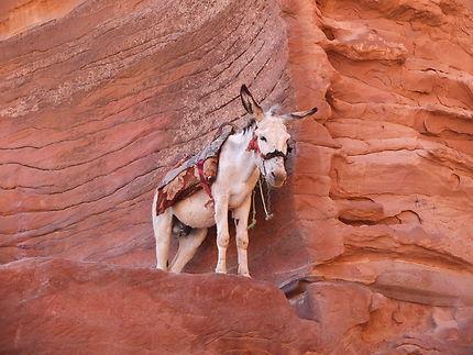 Dans les hauteurs de Petra