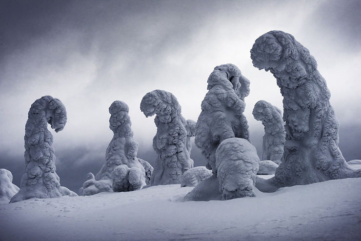 Arbres recouverts de neige en Laponie, Finlande