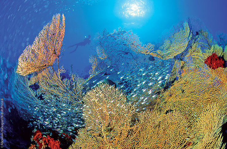 Gorgones géantes, Brothers Islands, Égypte