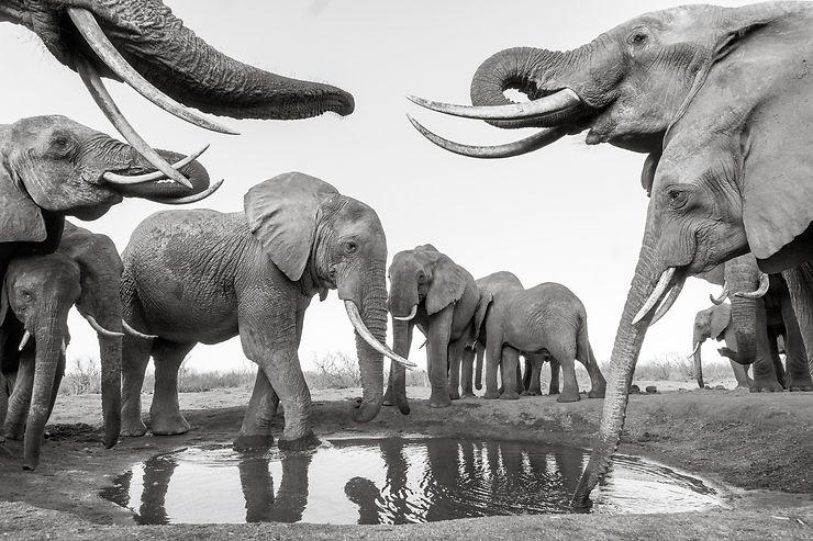 Éléphants dans le Parc de Tsavo, Kenya