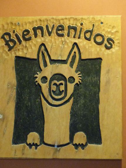 Le Guanaco emblématique