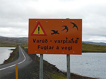 Panneaux de protection pour les oiseaux nichant et volant près de la route