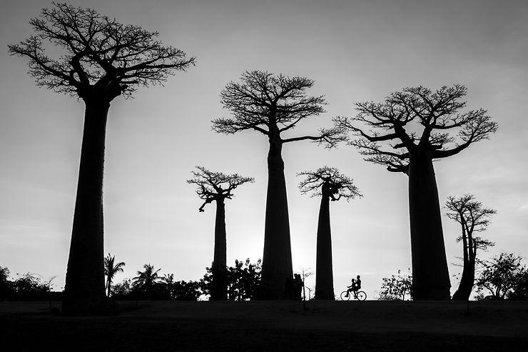 À bicyclette sur l'allée des baobabs, Madagascar