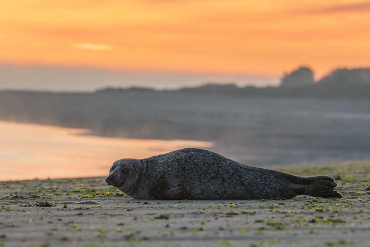 Baie de Somme : bernaches, phoques et salicornes