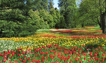Tulipes au jardin botanique de l'île de Maineau