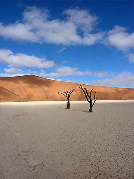 2 arbres seuls