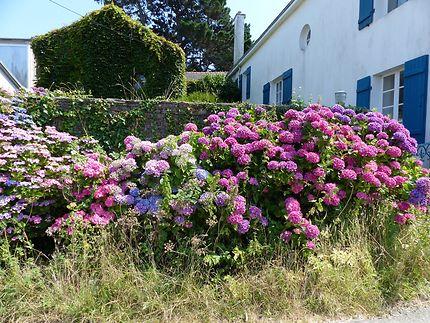Abondance de fleurs