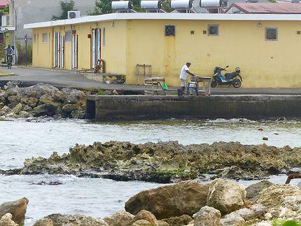 Vente de poissons au Moule, Guadeloupe