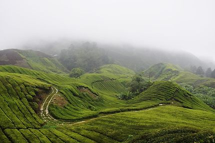 Cameroun Highlands sous la brume