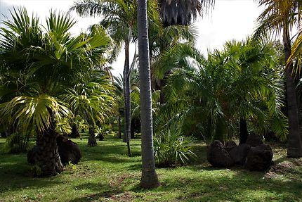 Jardin tropical et plantation de palmiers, Funchal