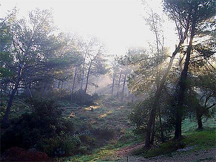 Brume matinale dans les Alpilles