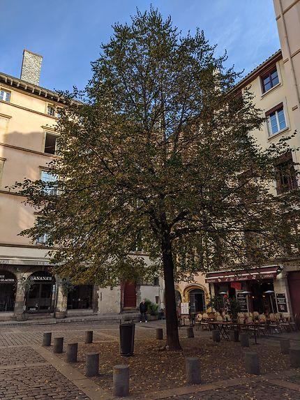 Arbre du vieux Lyon