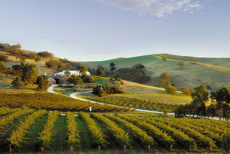Barossa Valley, la grande région viticole australienne