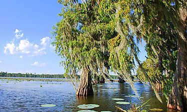 Lake Martin (pays cajun et bayous)