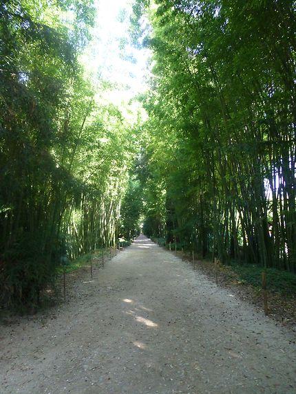 Longue allée de bambous, Cévennes