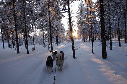 Sortie chien de traîneau en Laponie suédoise