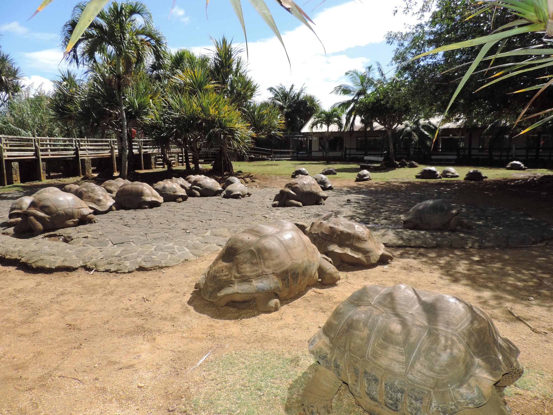 La Vanille (Réserve des Mascareignes) - Île Maurice, Rodrigues