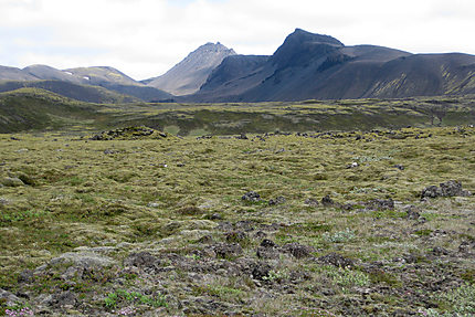 Toundra islandaise