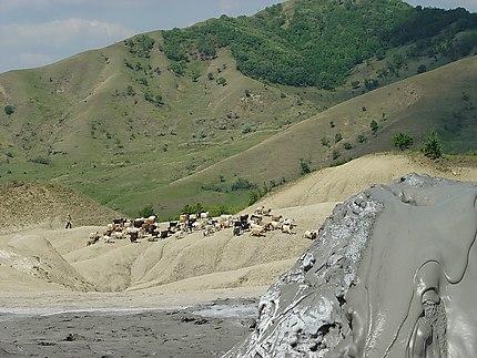 Vulcanii noroiosi - Ravissant coulis de boue