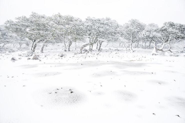 Parc de Giara, Sardaigne