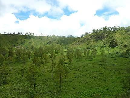 Paysages boisés, aux environs du Wawo Muda