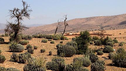 De Tafraoute à Tiznit