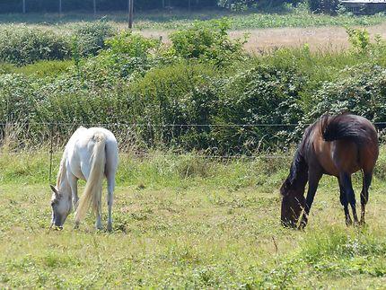 Les chevaux de l'île