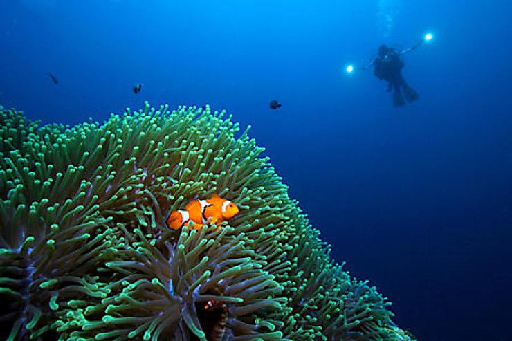 Les meilleurs spots de plongée