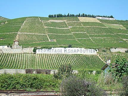 Collines de vignes à Tain l'Hermitage