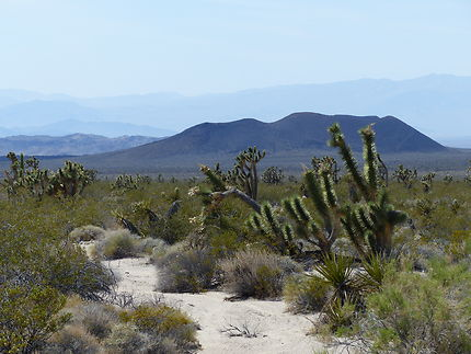 Ancien volcan Mojave National preserve