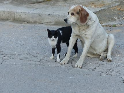 Complicité chat/chien