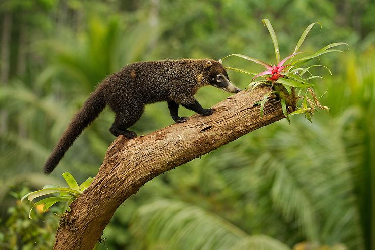 Costa Rica, un paradis vert