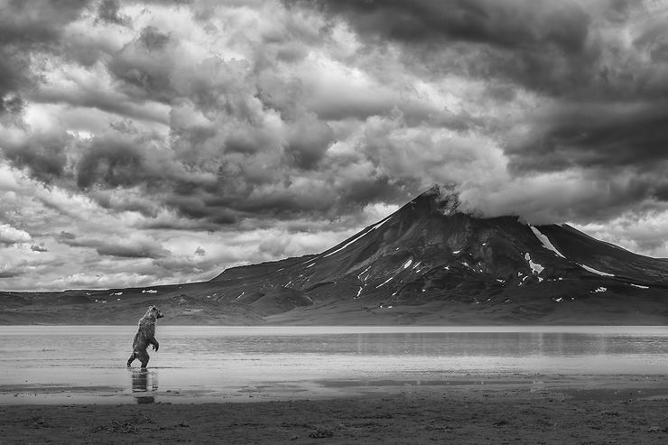 Ours, Kamchatka, Russie