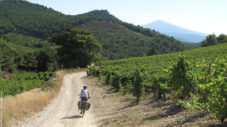 Provence - La région du mont Ventoux, une destination VTT