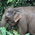 Madame éléphant