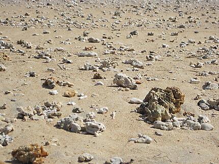 Coraux sur la plage
