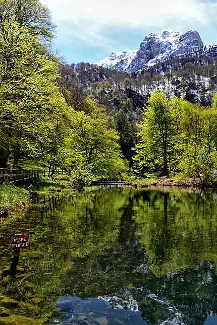 Reflet Lac de Bethmale
