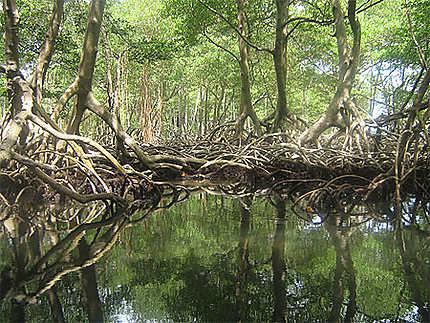 Parc naturel de Los Haïtes