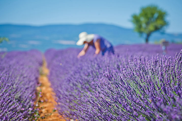 Provence, destination n°3 en France métropolitaine en 2017