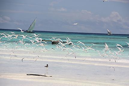 Envol sur la plage de Muyuni