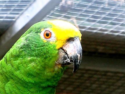Perroquet au jardin botanique