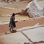 Ramassage du sel