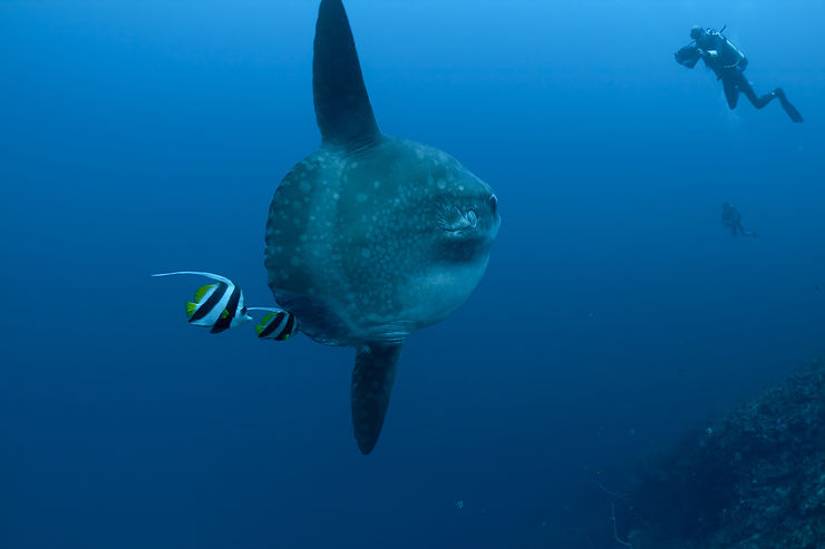 Mantas, Mola Mola et fonds marins extras