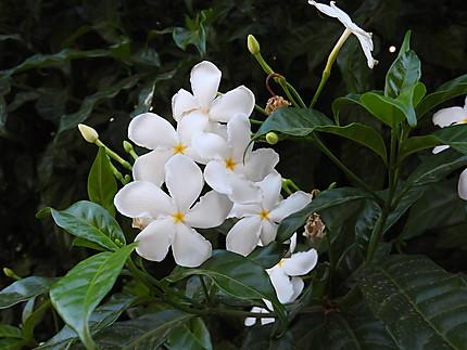 Rivas - Fleurs du parc central